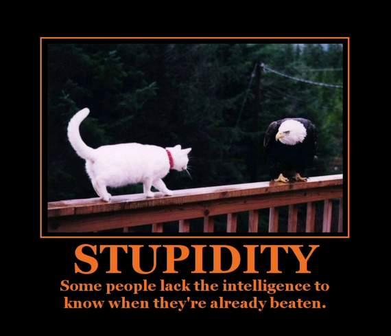 Humorous pictures Stupid11