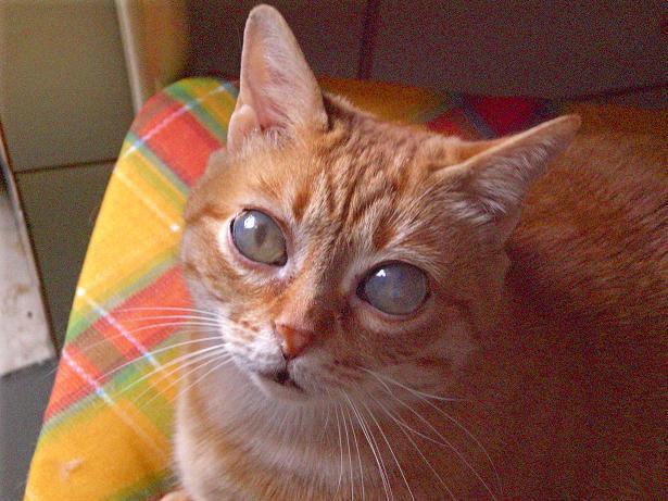 I gatti di NinfaEco - Pagina 2 O10