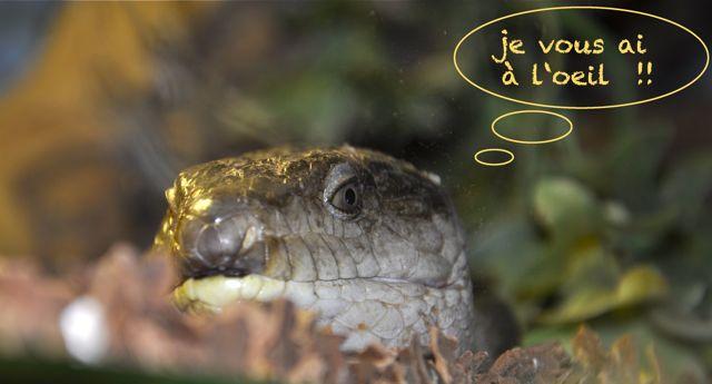 Créations de Tipiti60 Reptil10