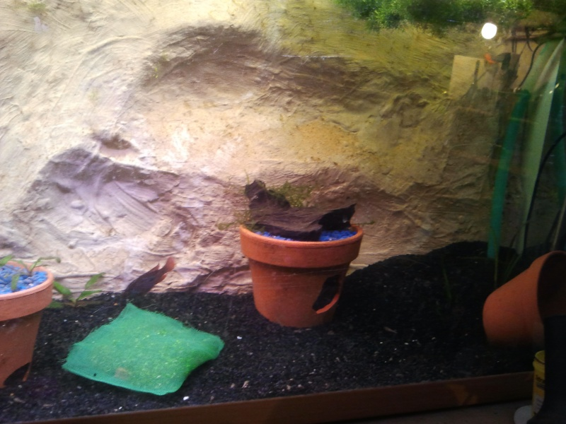 mon aquarium 20130210