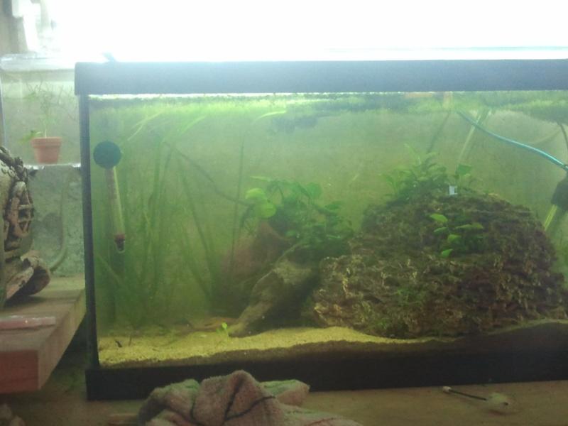 mon aquarium 20130212