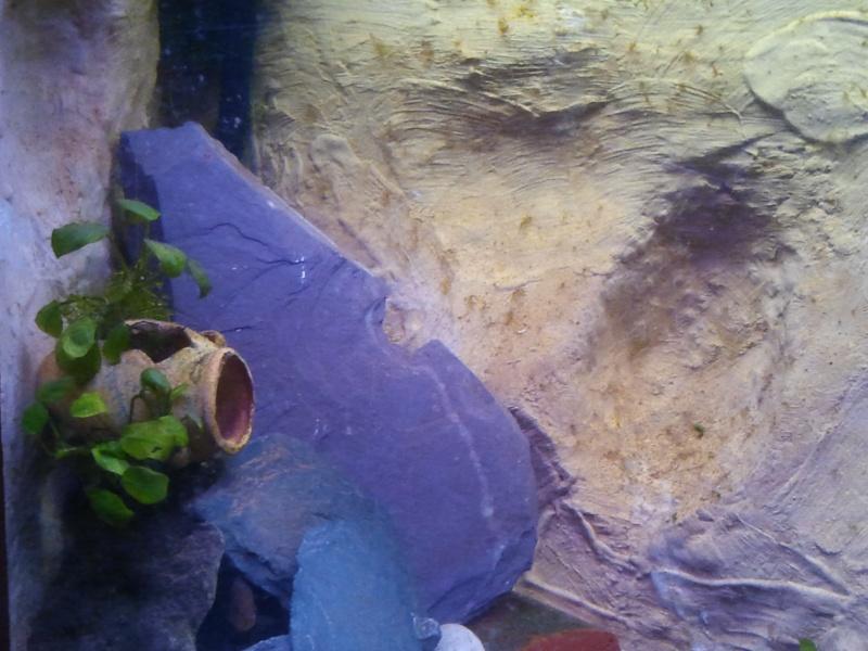 mon aquarium 20130213