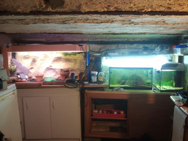 mon aquarium 20130214