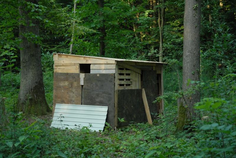 Construction d'abri dans un bois Dsc_9610