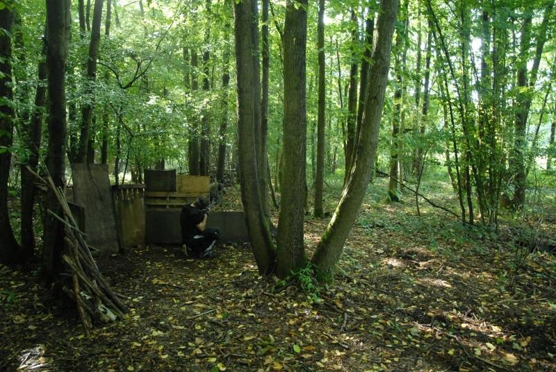 Construction d'abri dans un bois Dsc_9613