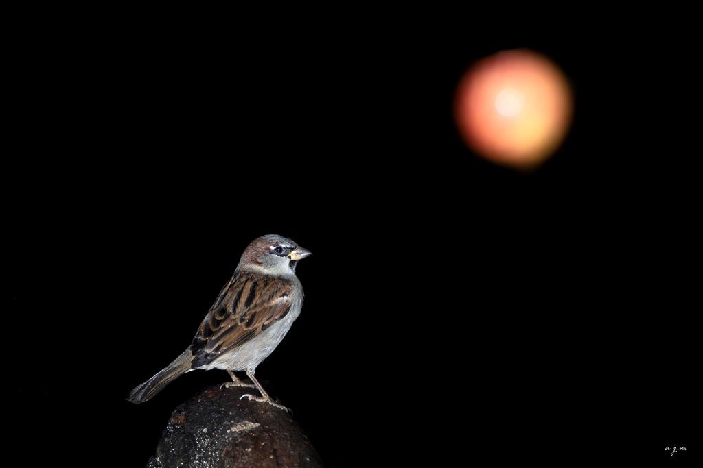 Lune rousse _ajm5010