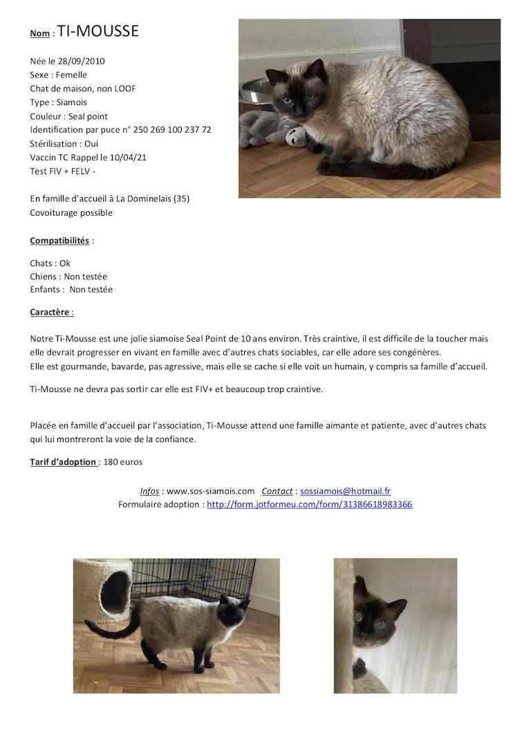 Fiches d'une partie de nos chats adoptables  Fiche113