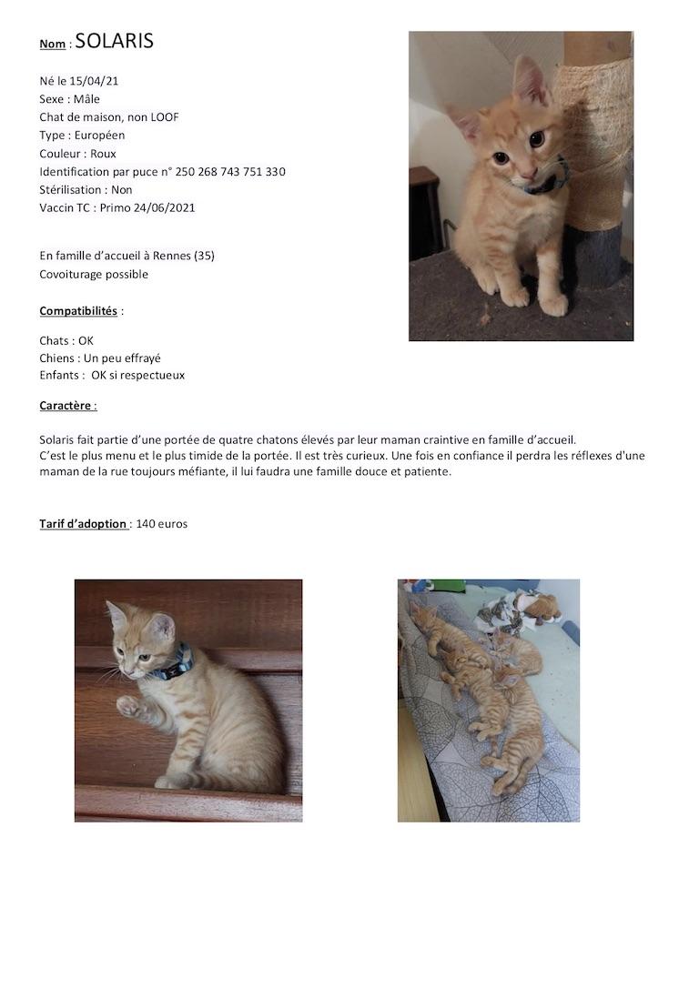 Fiches d'une partie de nos chats adoptables  Fiche117