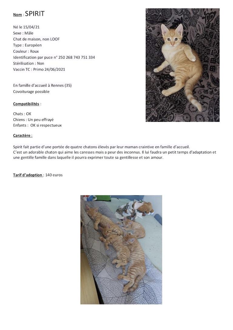 Fiches d'une partie de nos chats adoptables  Fiche119