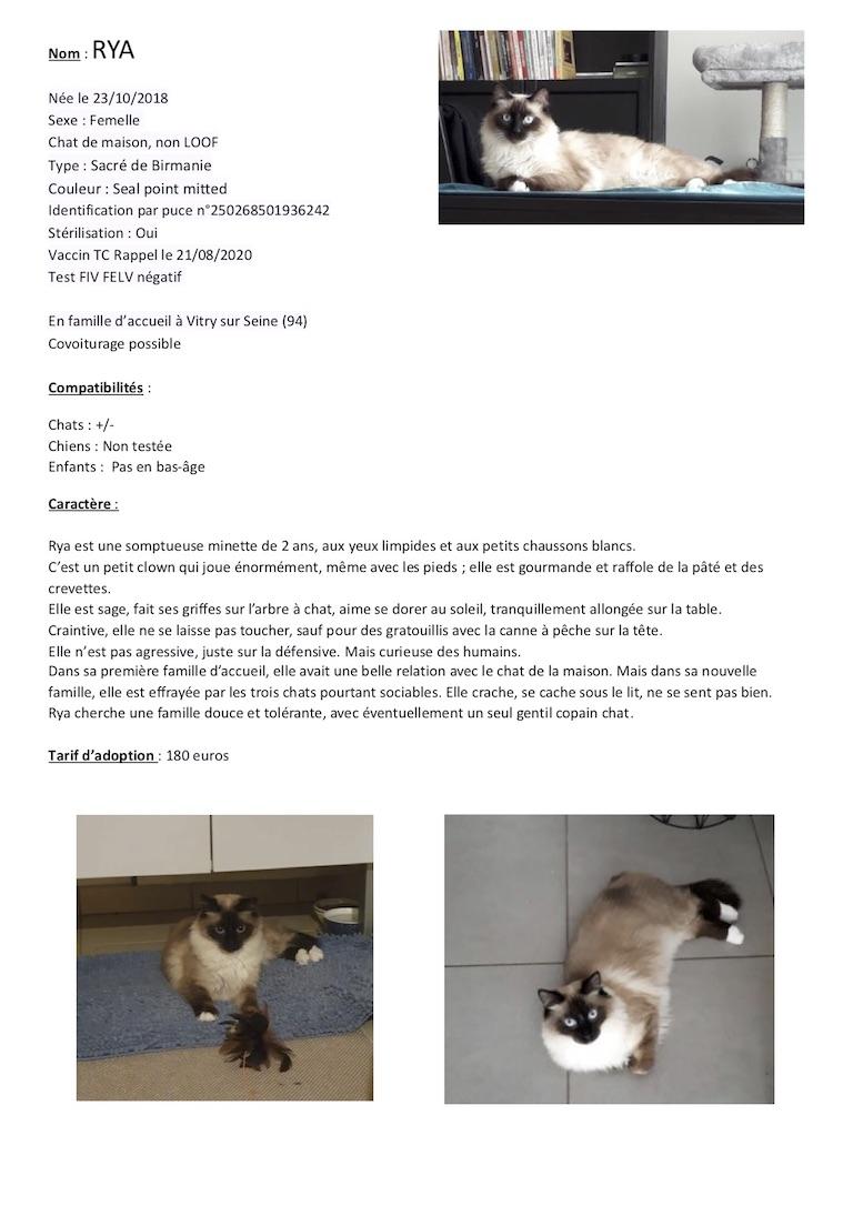 Fiches d'une partie de nos chats adoptables  Fiche123