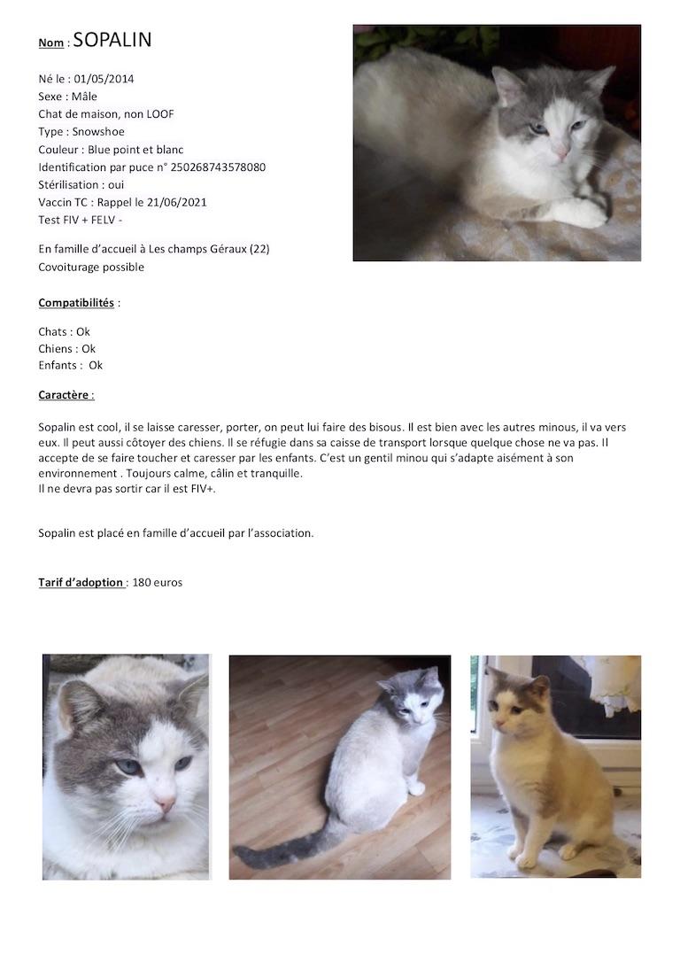 Fiches d'une partie de nos chats adoptables  Fiche126