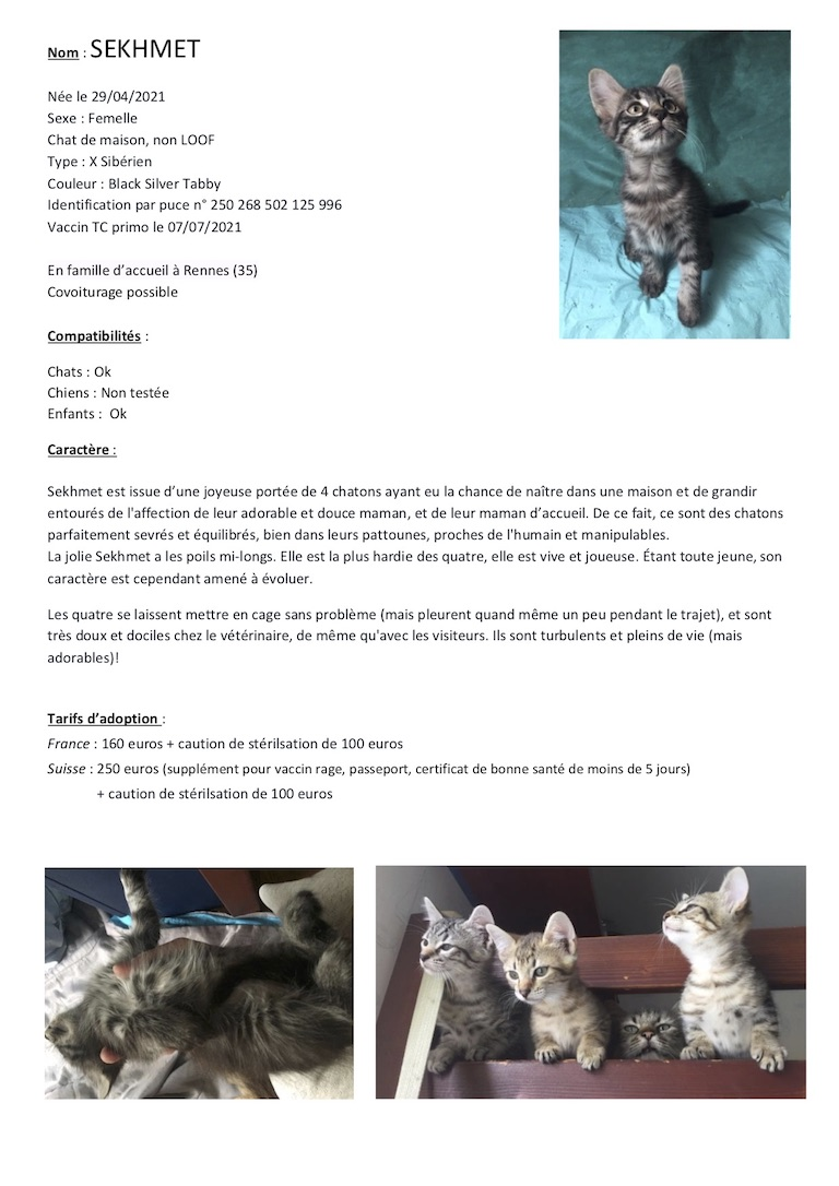Fiches d'une partie de nos chats adoptables  Fiche128