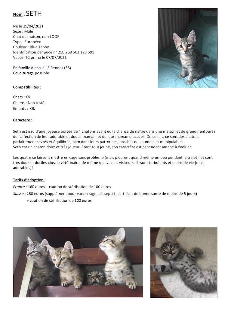 Fiches d'une partie de nos chats adoptables  Fiche129
