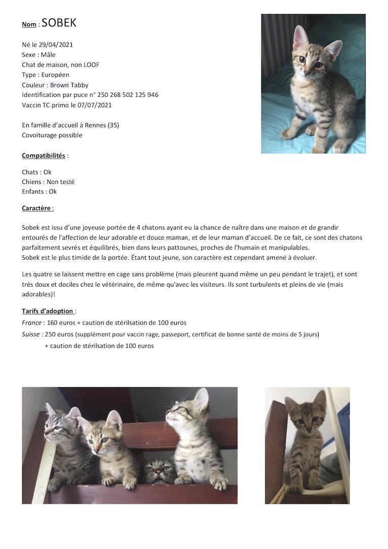 Fiches d'une partie de nos chats adoptables  Fiche131