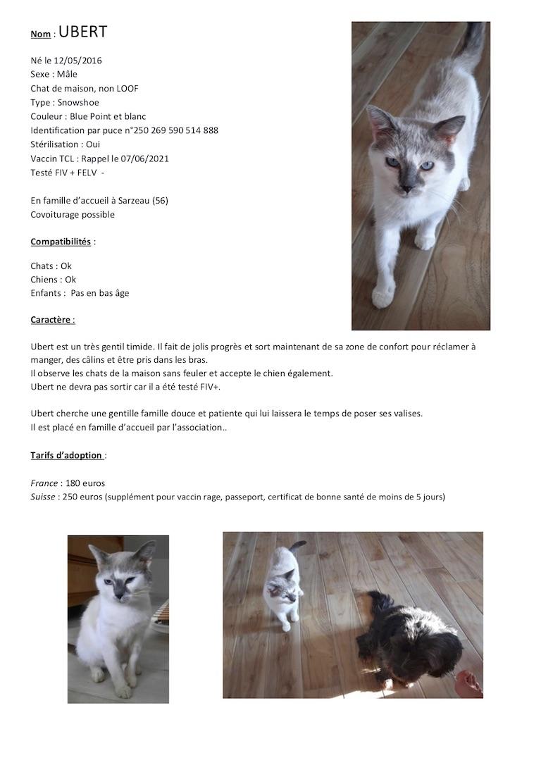 Fiches d'une partie de nos chats adoptables  Fiche132
