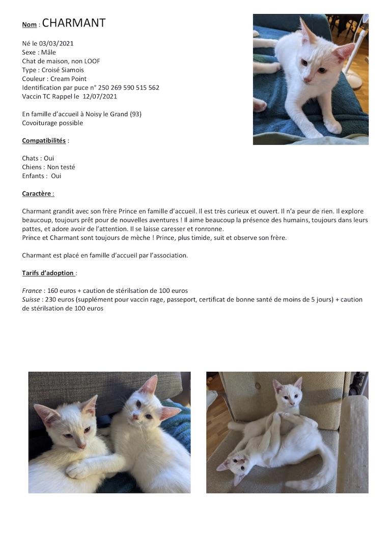 Fiches d'une partie de nos chats adoptables  Fiche135