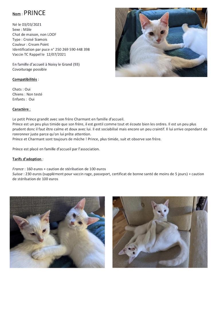 Fiches d'une partie de nos chats adoptables  Fiche136