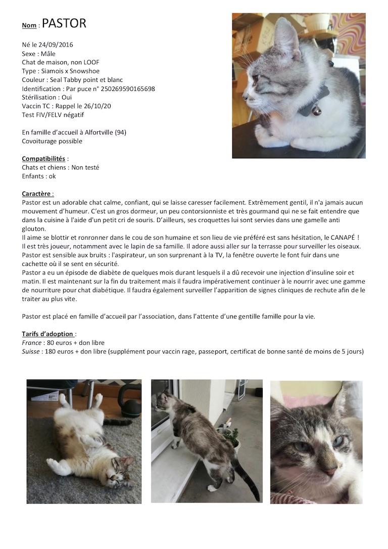 Fiches d'une partie de nos chats adoptables  Fiche139