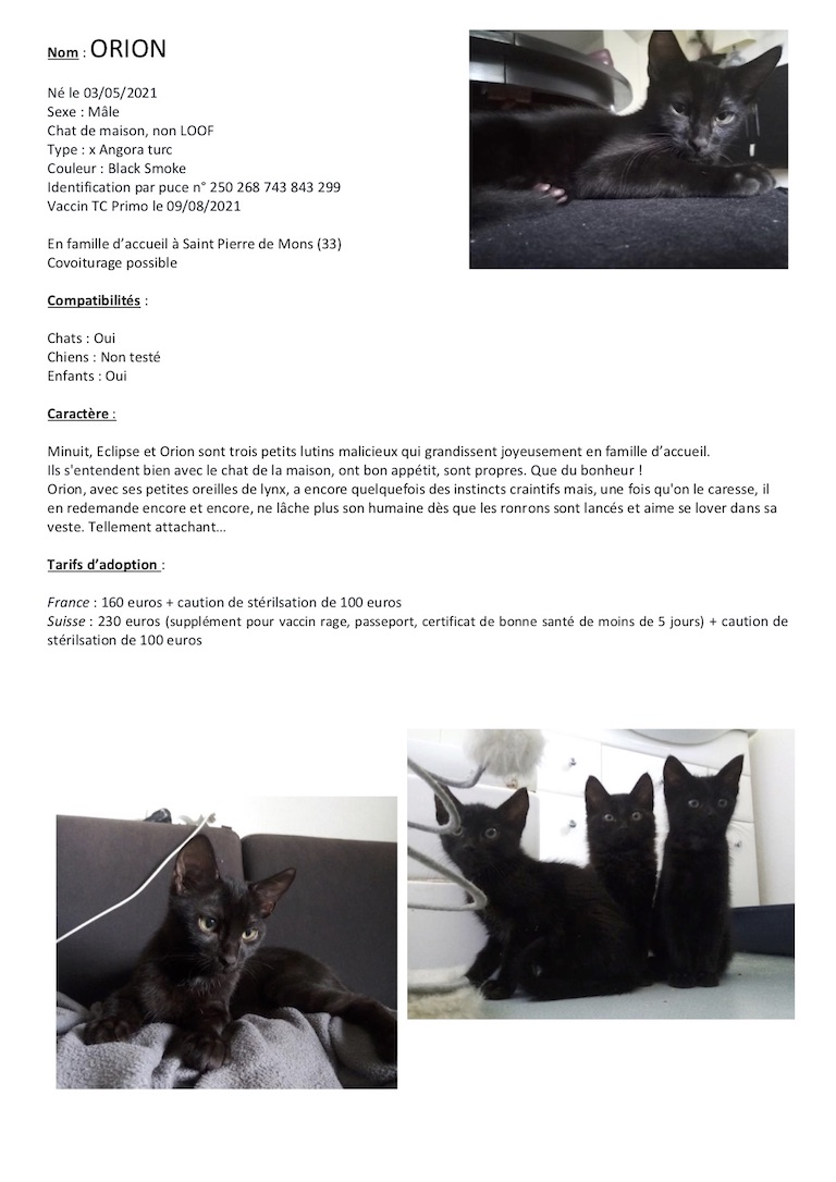 Fiches d'une partie de nos chats adoptables  Fiche143