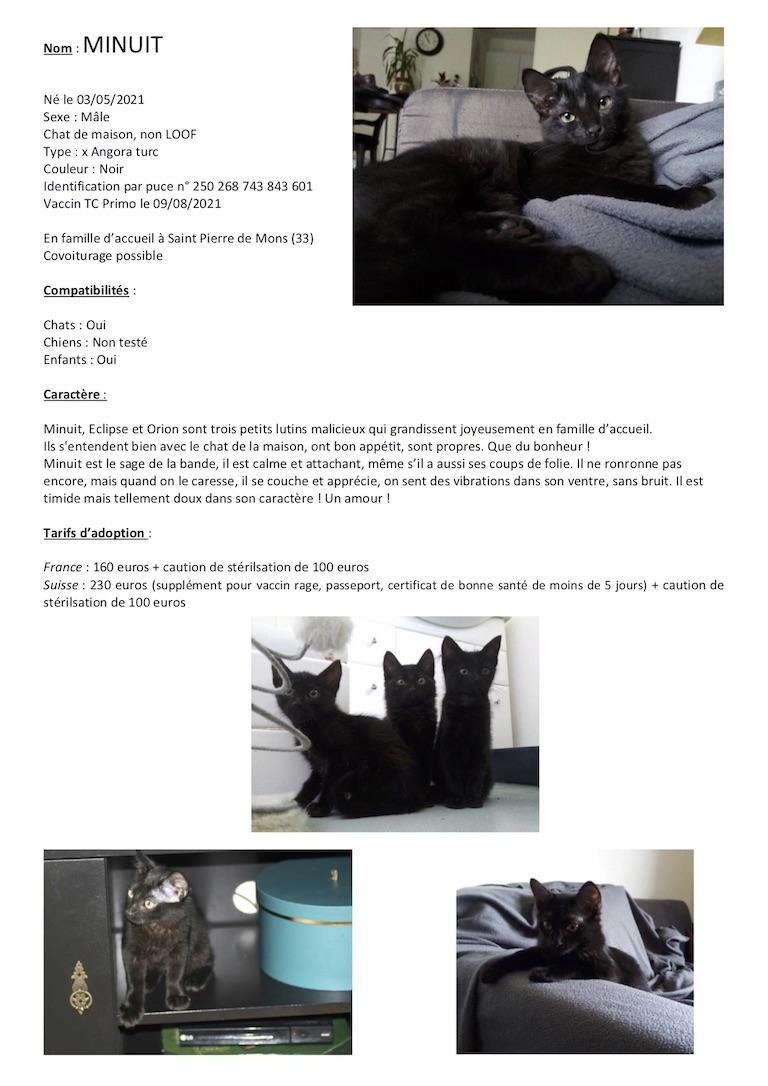 Fiches d'une partie de nos chats adoptables  Fiche144