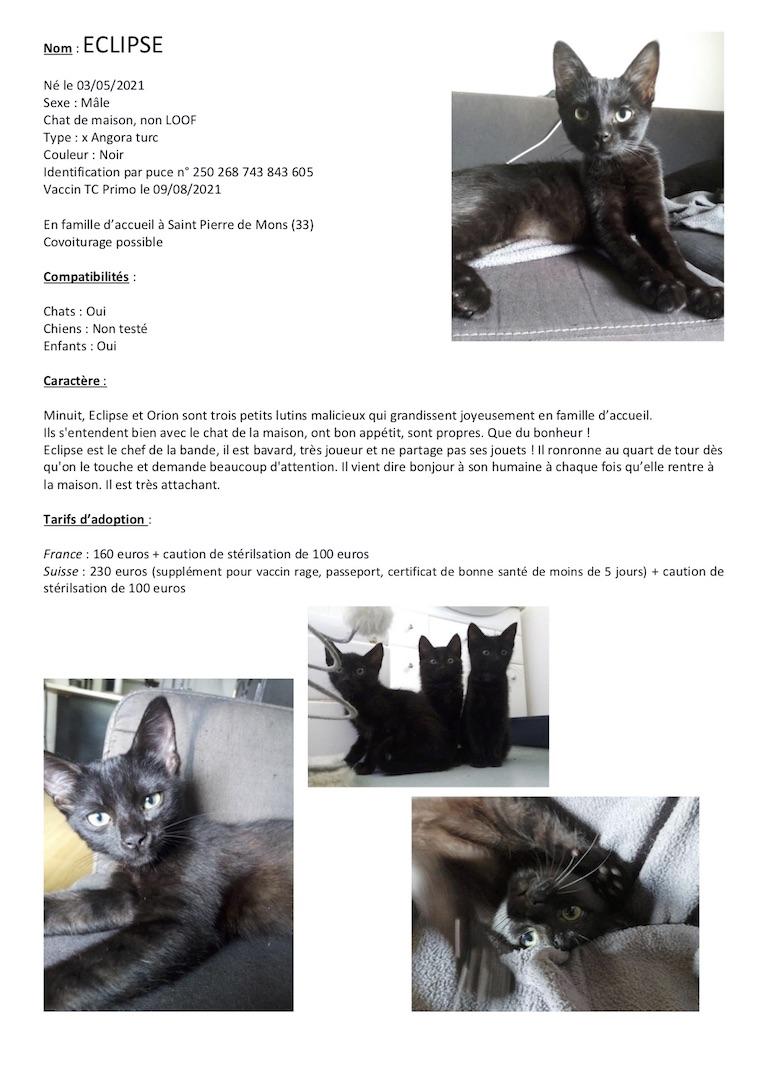 Fiches d'une partie de nos chats adoptables  Fiche145
