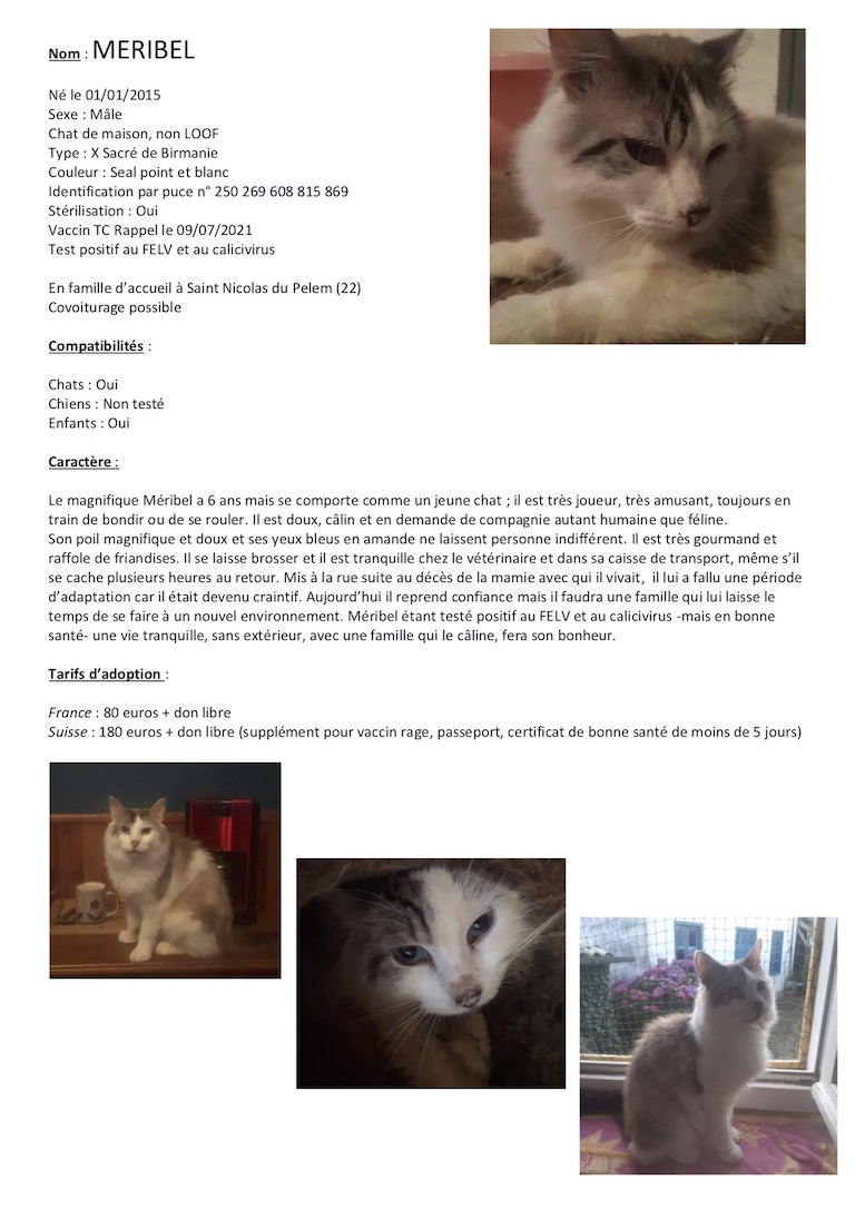 Fiches d'une partie de nos chats adoptables  Fiche148