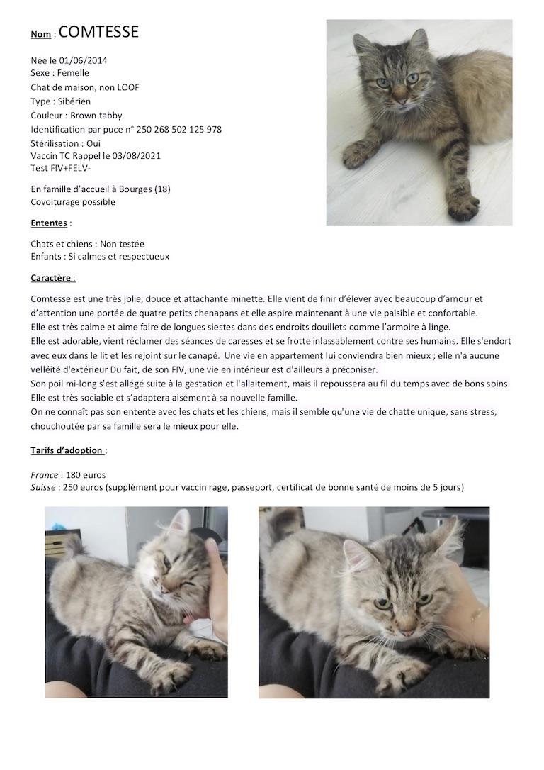 Fiches d'une partie de nos chats adoptables  Fiche154