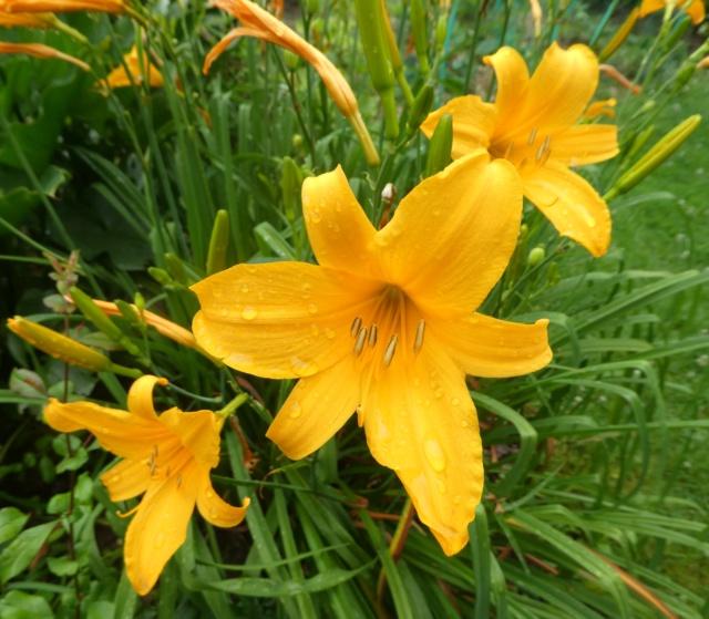 5 juillet : une ou des fleurs Cs_zot12