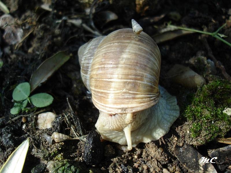 Oh l'escargot Dsc01010