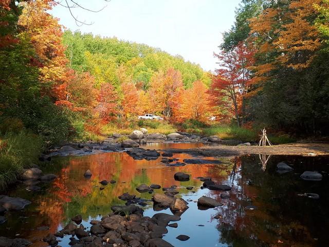 52 - Concours 'L'automne' !!! Dimach11