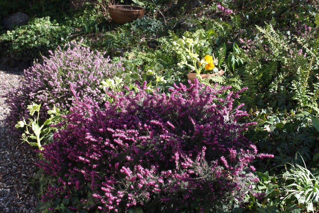 Mon jardin 0213b310