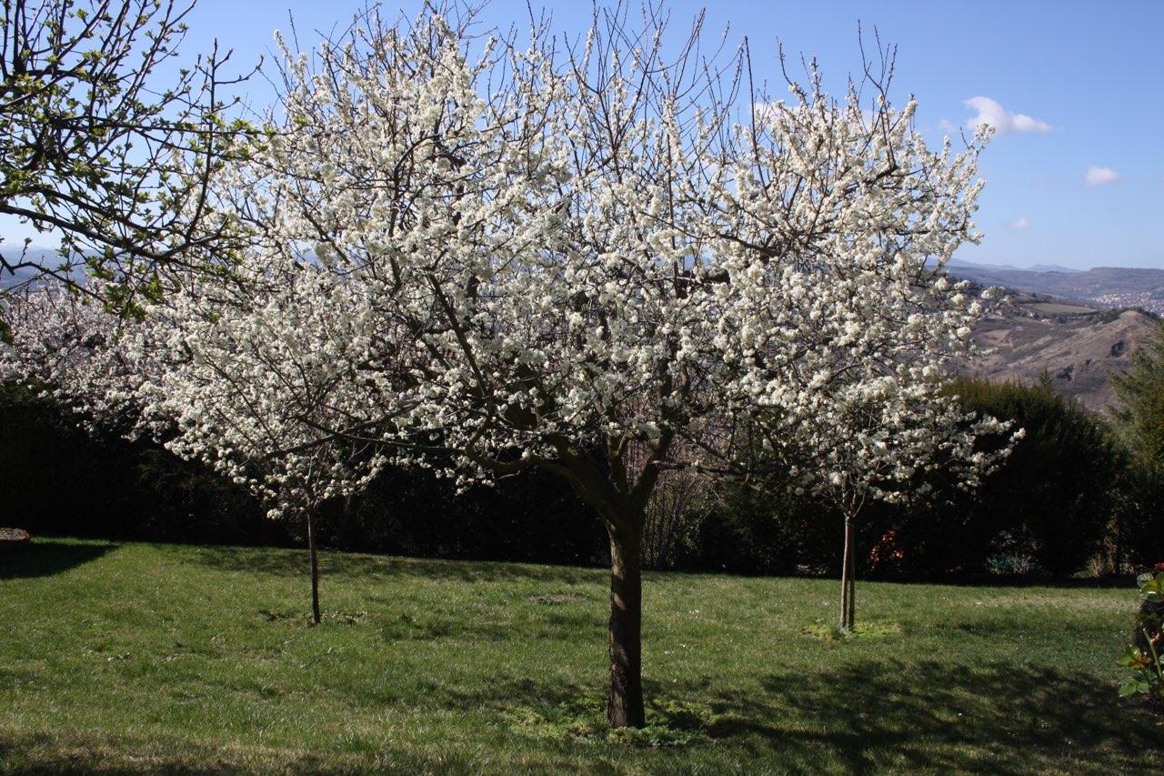 Mon jardin 6a321c10