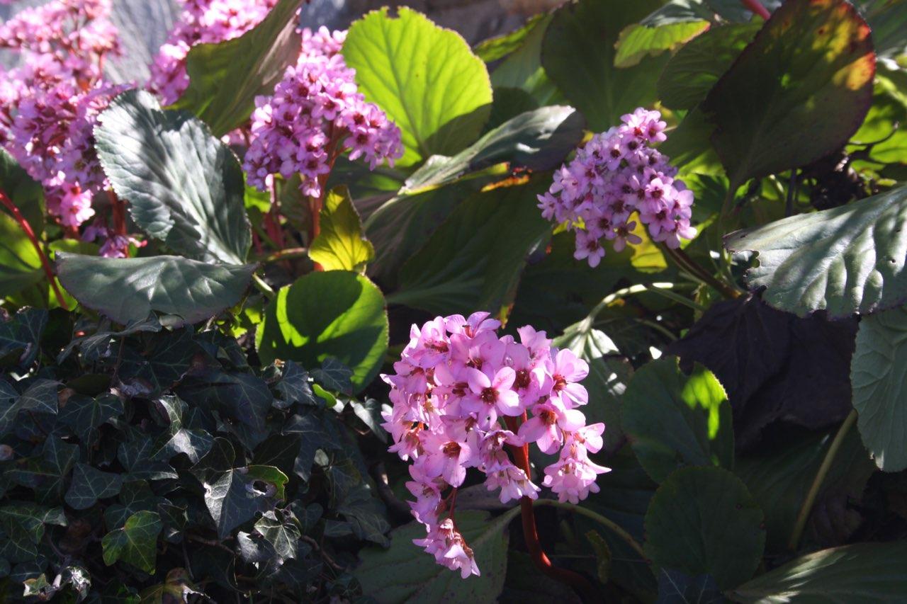 Mon jardin 7a078911