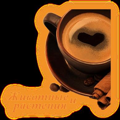 Гадание на кофейной гуще. Обозначения гадания на кофейной гуще. __a_510