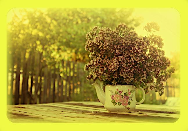 Магическое использование Майорана (сладкого) (Origanum majorana, Majorana hortensis). A59