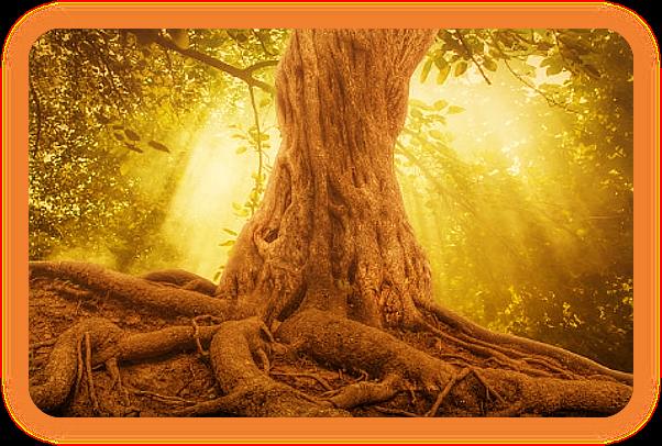 Выполните ритуал медитации Земли. A_117