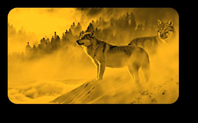 Январь 2020- Полнолуние Волка – Урок Несовершенства. A_n_410