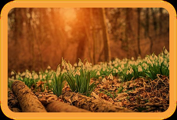 Языческий и Викканский Календарь на Март 2019 года. Aa_218