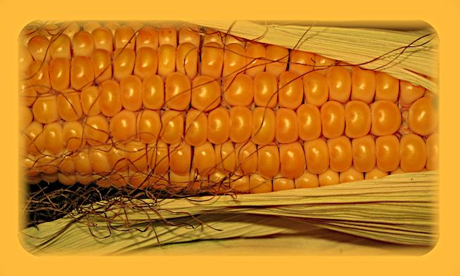 Магическая история кукурузы. Aaaa17