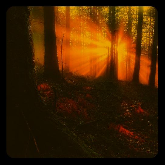Лита. Летнее солнцестояние. Ai_411