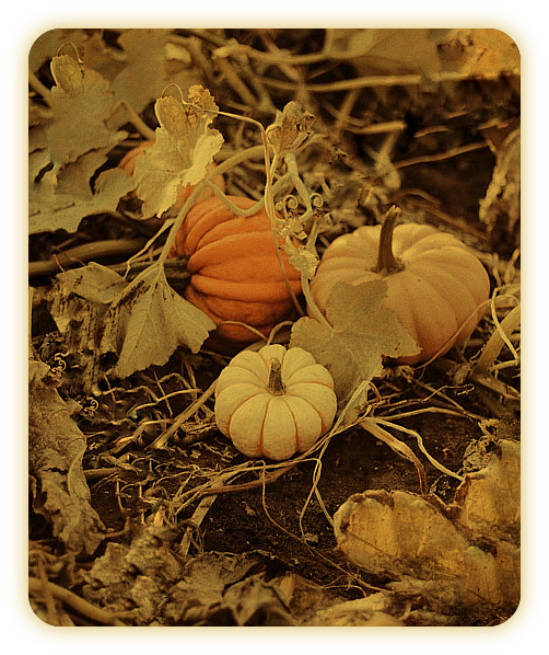 Самайн 31 октября 2018 года: обряды и ритуалы. E_510