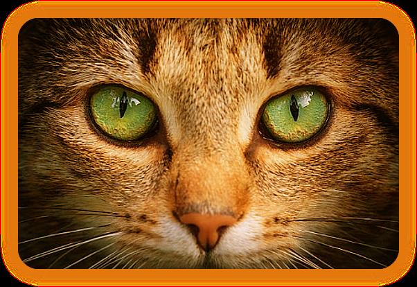 Кошачьи Усы и Колдовство. I_510