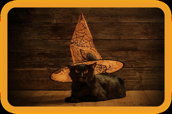 Кошки и Ведьмы. I_u_810