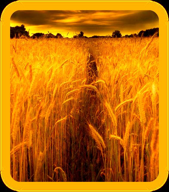 Ритуал Урожая на Ламмас. Ia___210