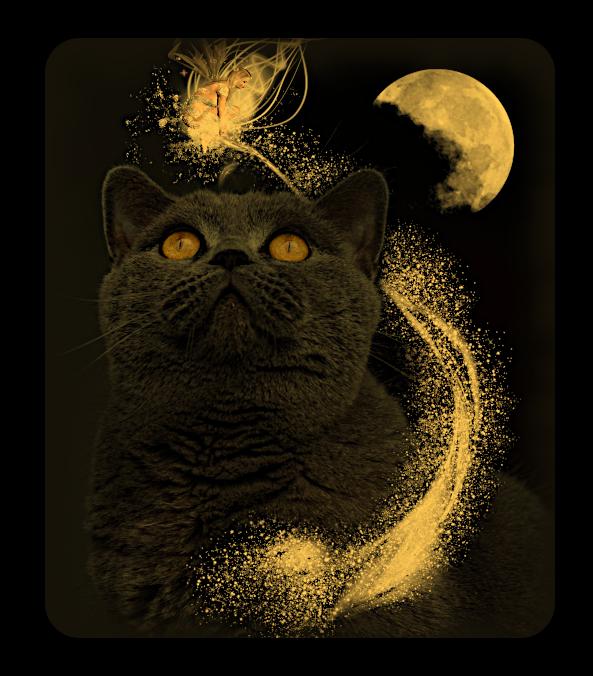 Магические Кошки - как Фамильяры и Тотемы. Iuu_u_12