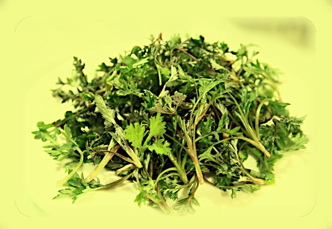 Магическое использование Полыни обыкновенной (Artemisia vulgaris). Ou13