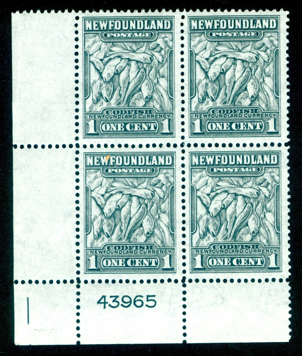 Neufundland Newfou15