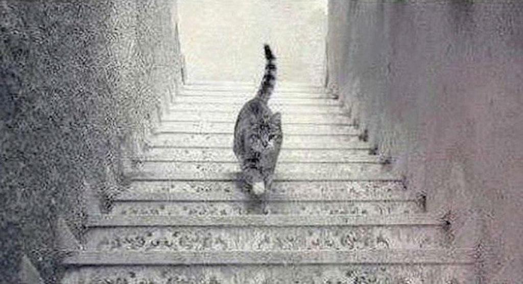 Ilusiones ópticas Cat-go10