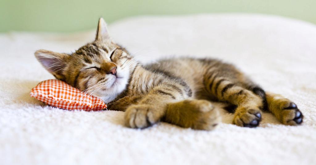 Hilo para dar las buenas noches  - Página 3 Gatito10