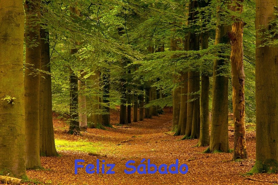 Hilo para dar los buenos días - Página 17 Trees-10